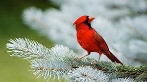 Bird Cardinal Funeral Home And Cremations Lincoln CA