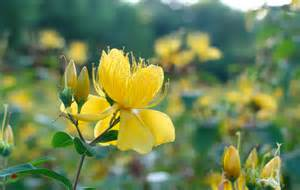 Flower Yellow Funeral Home And Cremations Roseville CA