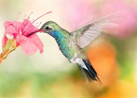 Hummingbird And Flower Funeral Home And Cremations Roseville CA