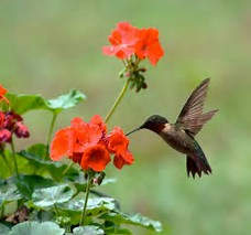 Hummingbird And Flowers Funeral Home And Cremations Roseville CA